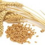 Wheat in Pakistan