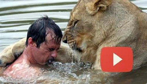 This-man-tried-to-hug-a-wild-Lion